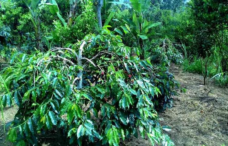 Potensi Alam Desa Catur Kintamani di Kawasan Batur Global Geopark